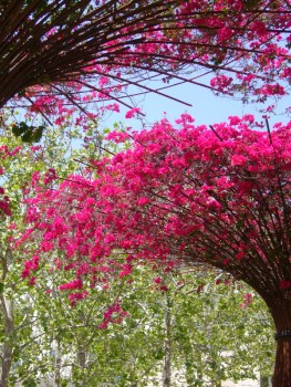 Getty Garden (50)-qpr