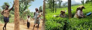 krishnapra-wayanad